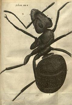 n264_w1150 | Micrographia, or, Some physiological descriptio… | Flickr
