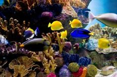 Keeping Saltwater Aquariums - we have a service because it's a lot of work. Learn how to keep your own.