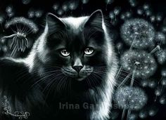 Black Cat art by Irina Garmashova-Cawton Good Night Cat, Black Cat Art, Black Cats, Cat Character, Cat Drawing, Black And White Pictures, Cats And Kittens, Cat Lovers, Dandelions