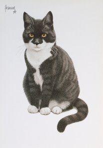 Postkaarten    Francienªs Katten    Francien Westering, van    C6080    Postkaarten, Tekeningen, Dieren, Katten,