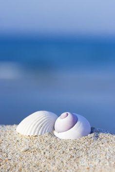 Beach - shells in the sand Beach Art, Ocean Beach, I Love The Beach, Ocean Life, Sea Creatures, Under The Sea, Beautiful Beaches, Sea Shells, Seaside