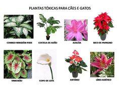 Resultado de imagem para nomes de plantas para interiores