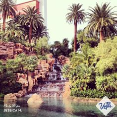 Your desert oasis at The Mirage Hotel & Casino #Vegas