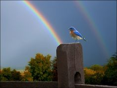 What a beautiful bird and a double rainbow!