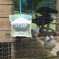 Fresh Eggs Daily: Got Flies ? Here's an Idea for a DIY Fly Catcher Raising Backyard Chickens, Keeping Chickens, Pet Chickens, Backyard Farming, Chicken Runs, Chicken Life, Bunny Cages, Mini Farm, Hen House