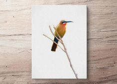 """""""King"""" Bee Eater Bird Canvas Painting"""