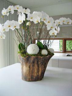 Die 10 Besten Bilder Von Orchideen Dekoration Floral Arrangement
