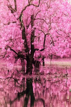 the gorgeousness of cherry blossom trees sits well with me :) Beautiful World, Beautiful Places, Beautiful Pictures, Roses Tumblr, Pink Trees, Belle Photo, Beautiful Landscapes, Mother Nature, Pretty In Pink
