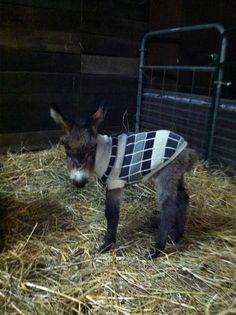 Little Donkey Visit our page here: http://what-do-animals-eat.com/donkeys/