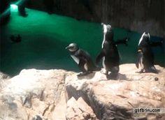 bully penguin