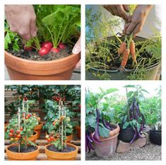 10 Vegetables that YOU Can Easily Grow in Containers