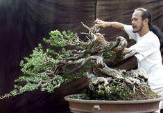 the bonsai master...there are many! Will come back and list a few from my Bonsai book collection. Have heard and worked with some at workshops...so much fun! ctc