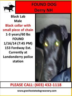 #FOUNDDOG 1-16-14 #DERRY #NH  BLACK MALE #LABRADORRETRIEVER BLACK COLLAR WITH SMALL PIECE OF CHAIN 1-3 YEARS OLD 60 LBS LONDONDERRY POLICE STATION 603-432-1118 https://www.facebook.com/granitestatedogrecovery/posts/676270519095801:0