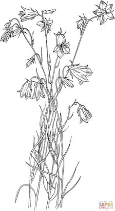 Bluebell Bellflower coloring page | SuperColoring.com