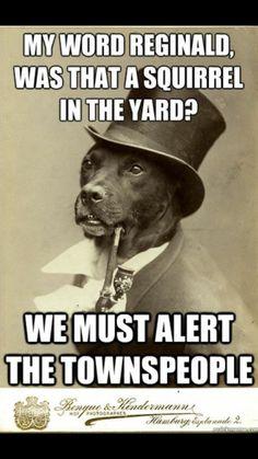Love this dog haha