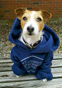 Sharkey Pup :: Sharkey Visits New Hampshire by Susan R. Stoltz