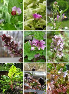Blüten, Gemüse, Chili - ein Traum in violett