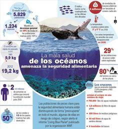 """Las poblaciones de peces clave para la seguridad alimentaria humana están disminuyendo de forma """"preocupante"""" en todo el mundo, algunas de ellas en riesgo de colapso, según alerta el informe """"Living Blue Planet"""" publicado por la organización WWF. EFE"""