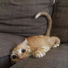 Cat-nipped (aka, kitty crazies)