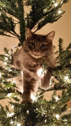 Lets Talk About Keeping Cats Safe During Winter Storms – CatTime Your cat assumes that this is the special time of year you take off … Cute Cats And Kittens, I Love Cats, Crazy Cats, Kittens Cutest, Animal Gato, Mundo Animal, Funny Cats, Funny Animals, Cute Animals