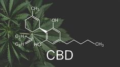 This July, a study by ValidCare will kickoff to examine the adverse effects that CBD could potentially have on the liver. ValidCare is a clinical research company that aims to keep consumers safe and informed. Though it was initially scheduled to begin in March, COVID-19 postponed the commencement of the study. The goal of ValidCare's […] The post CBD FDA Regulation: Toxicity Study To Start In July appeared first on Tech Geeked. #cbd #hemp