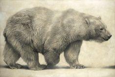 Polar Bear I / Ursus maritimus / 2010 / 100 x 150 cm / Pencil on panel