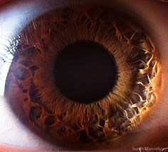 21 Pictures Showing The Human Eye