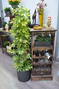 Schefflera. Planta de interior originaria de las zonas tropicales.  http://lessolaes.es/tienda/planta-interior-verde/schefflera/