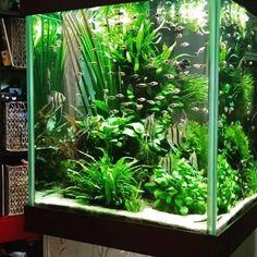 Aquascaping https://twitter.com/acuario3web (@acuario3web)