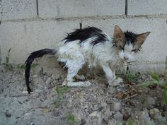 The Stray Animals in Europe | There are graphic images, but the story must be told. You can turn away, but remember, these poor animals live in a life of hell from which they can not just click to another screen or turn off their computer. It is up to all of us to spread the word of their suffering and do what we can worldwide to alleviate it. We are their only voice. Please remember that.