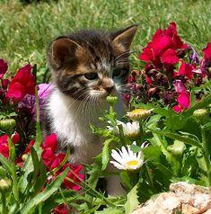"""""""un chaton est au monde animal ce qu'un bouton de rose est au jardin"""" Robert Southey"""