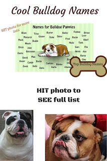Popular English Bulldog Names Bulldog Names Best Dog Names
