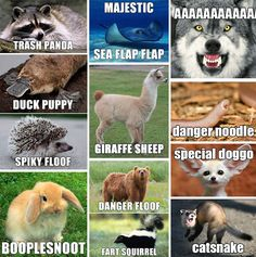 Animal names for Brace yourselves! 23 Hilarious Animal Memes So Cute They'll Make You LOL Other names for animals Need a Laugh? These Animal Memes Should Do the Trick! Funny Doggo Memes That Will Get Your Tail Wagging Top 40 Funny animal pi. Funny Animal Names, Cute Animal Memes, Funny Animal Quotes, Animal Jokes, Cute Funny Animals, Funny Animal Pictures, Funny Photos, Hilarious Animal Memes, Animal Captions