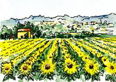 Sketching Italy Sunflowers of Tuscany' - http://irina-sztukowski.artistwebsites.com/featured/sketching-italy-sunflowers-of-tuscany-irina-sztukowski.html