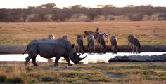My attempt at photography in my homecountry #Botswana #Rhinos