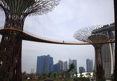 Gardens by the bay, Singapore. yet another reason why its at the top of my list for must see cities