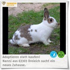Nanni sucht im Artgerecht Tierschutz e.V. ein Zuhause mit viel Freilauf.  http://www.tierheimhelden.de/kleintier/tierheim-dreieich/zwergkaninchen/nanni/7109-2/  Nanni hat leider eine Zahnfeststellung, die sie sich aber unproblematisch vom Tierarzt behandeln lässt. Sie ist natürlich Myxomatose und RHD geimpft.