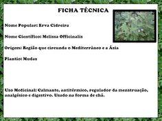 Plantas Medicinais - Os Incríveis: Erva cidreira por Rafael Varela