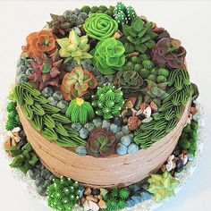 This week's Designer Spotlight goes to wonderful cake decorator Nanay Nikki for her mouth-watering Succulent Cake! Pretty Cakes, Cute Cakes, Beautiful Cakes, Amazing Cakes, Cupcakes Succulents, Kaktus Cupcakes, Crazy Cakes, Fancy Cakes, Cactus Cake
