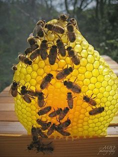 Beeswax and Honeybees.