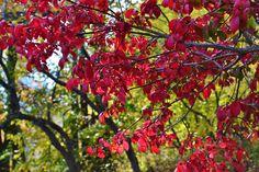 Central Park foto de Alejandra Koch