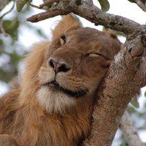 Sweet Dreams, Uganda