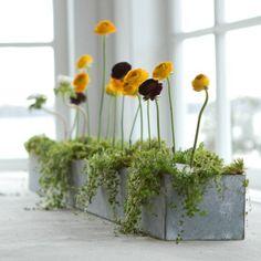 Friday Favorites: Garden Finds