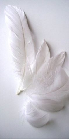 Feathers| White