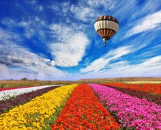 Flower Fields jigsaw puzzle in Flowers puzzles on TheJigsawPuzzles.com