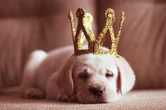 Every puppy should be treated like a prince and princess!
