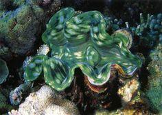 No Mar Profundo: Corais