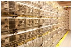 Equinix Data Centers, Silicon Valley - Battery Backups