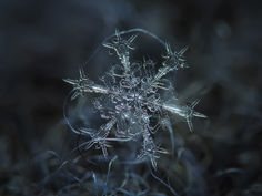 Real snowflake macro photo: Starlight, beautiful stellar dendrite crystal with sharp ornate arms, resembling swords