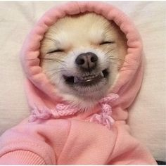 Cute Dog- animal funny